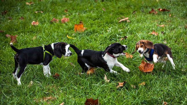 151209-dogs-playing-0971_44953c6b5988a6e5c15ed73ff5cc3e51.nbcnews-ux-2880-1000