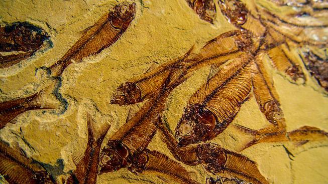 Fosilní vzorek. Ilustrační snímek
