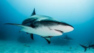 Pověst nelítostných zabijáků mají žraloci tak trochu neprávem