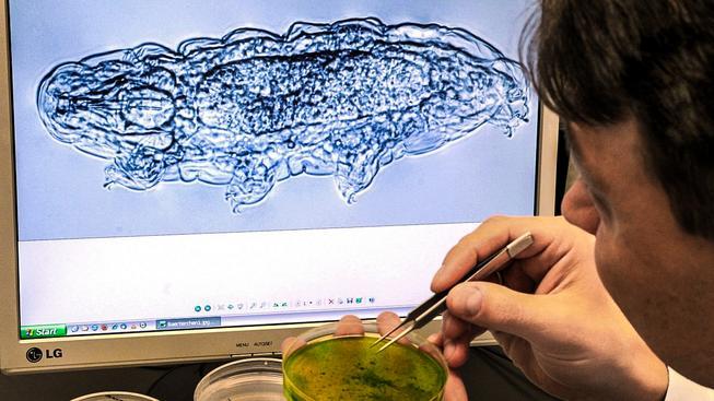 Neskutečná odolnost želvušek fascinuje vědce
