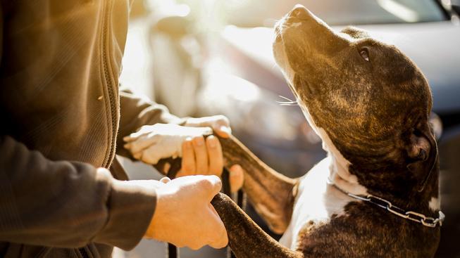 Psi dokážou rozeznávat lidské emoce
