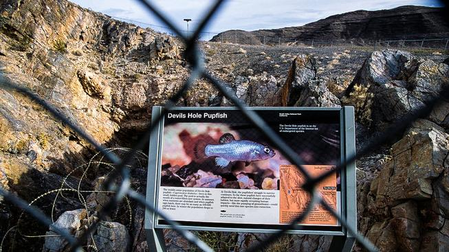 Ďábelská puklina v Údolí smrti, kde rybka žije