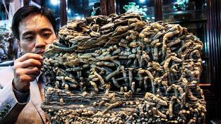 Fosílie stará 300 milionů let pocházející z období kambrijské exploze