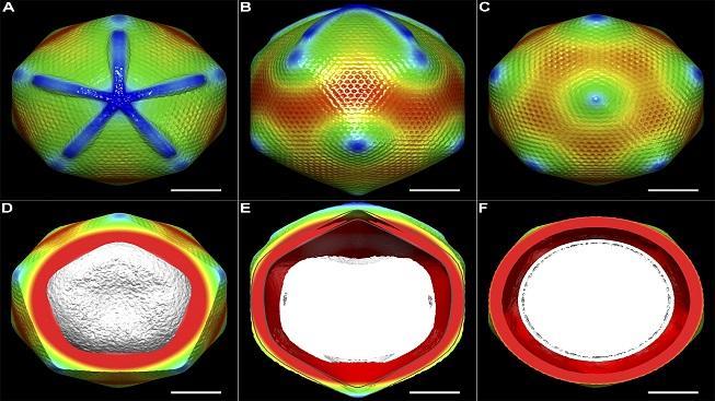 Kryoelektronová rekonstrukce mimiviru