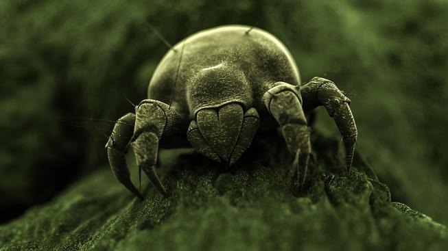 Nález dokázal, že roztoči žili už před 320 miliony let (ilustrační snímek)