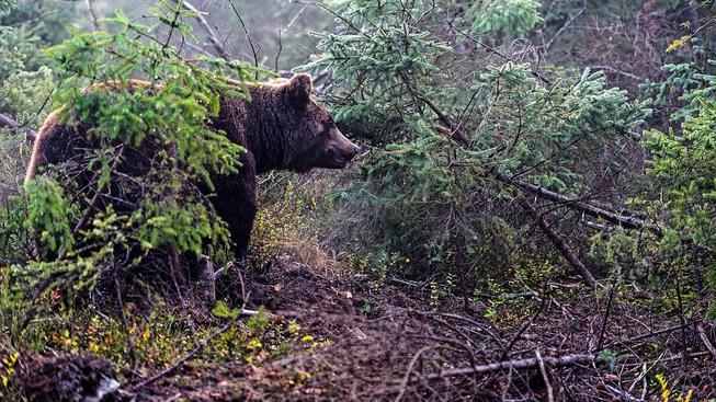 Francouzi si s medvědy nevědí rady. Ilustrační snímek