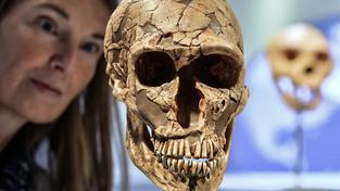 Replika lebky neandertálce