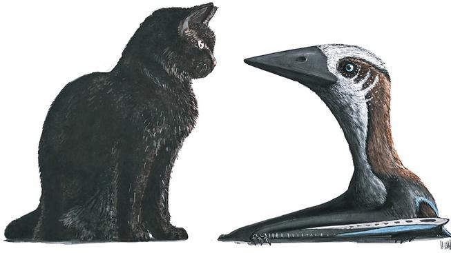Porovnání velikostí neobvykle drobného azhdarchida a současné kočky domácí