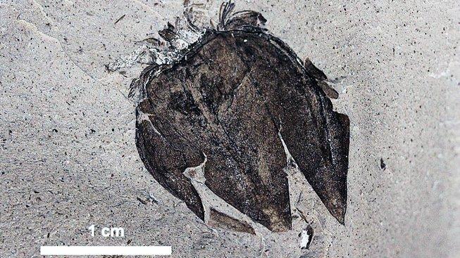 Přelomový objev. Zkameněliny nalezené v Argentině jsou výborně zachovalé