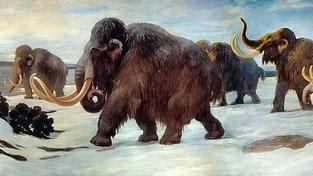 Poslední mamuti na Wrangelově ostrově. Ilustrace