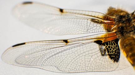 Jak vznikla křídla hmyzu? Další dílek evoluční skládačky doplnili čeští vědci