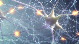 Impulsy mezi jednotlivými neurony jsou základem komunikace uvnitř našeho mozku