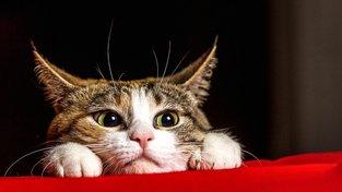 Vědci konečně odhalili, jak člověk (ne)ochočil kočku