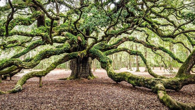 239 let a stále mlád? Rostliny hromadí mutace nečekaně pomalu