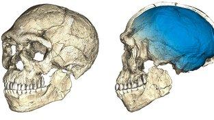 Rekonstrukce lebky z fosílií nalezených v Jebel Irhoud