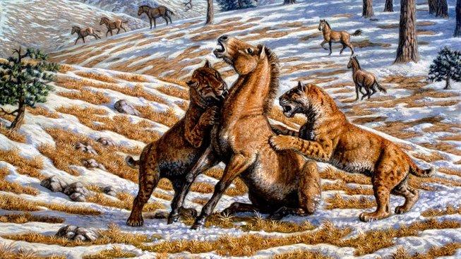 Šavlozubí tygři v Evropě zřejmě vymřeli mnohem později, než se vědci domnívali. Ilustrační snímek