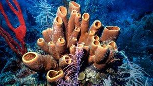 Mořské houby dokáží tvořit ze skla. Ilustrační snímek