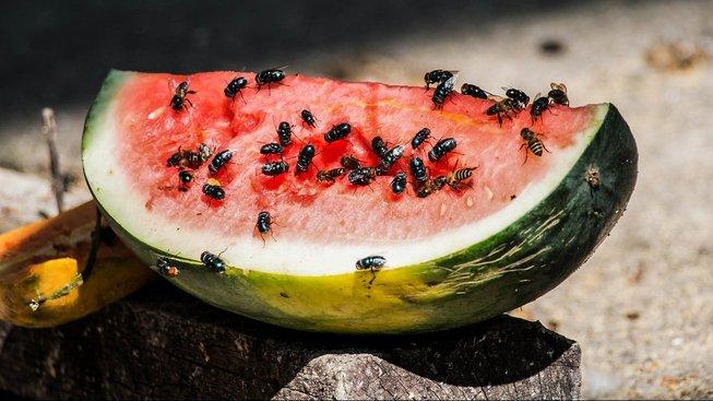 Mouchy přenášejí víc chorob, než jsme si mysleli. Ilustrační snímek
