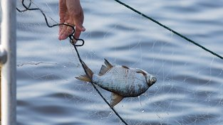 Rybám škodí zbytky antidepresiv v odpadních vodách