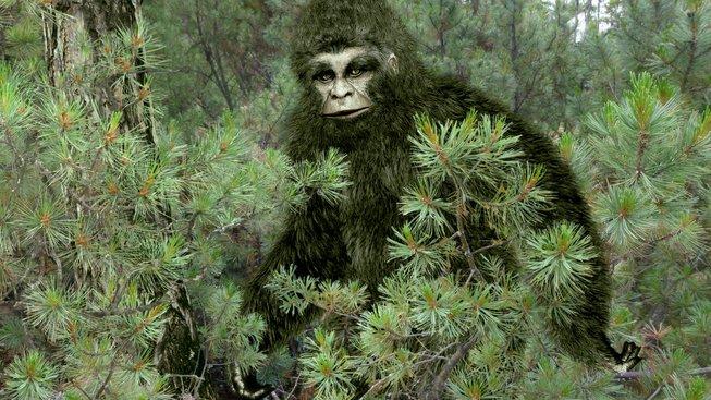 Analýzy údajných pozůstatků yettiho pomohly vědcům blíž poznat himalájskou medvědí populaci. Ilustrační snímek