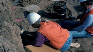 Objevy z Ceruttiho naleziště poblíž San Diega v Kalifornii mohou sahat až 130 tisíc let do minulosti