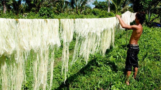 """Vlákna z ananasových listů slouží jako surovina pro výrobu """"kůže"""""""