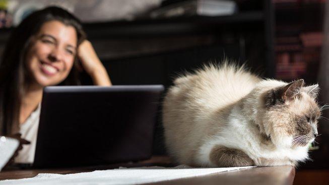 Pohled na domácí zvířata zvyšuje hladinu oxytocinu. Ilustrační snímek