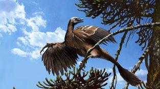 Umělecké zpodobnění Archaeopteryxe