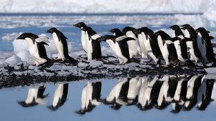 Vědci objevili nové superkolonie tučňáků kroužkových