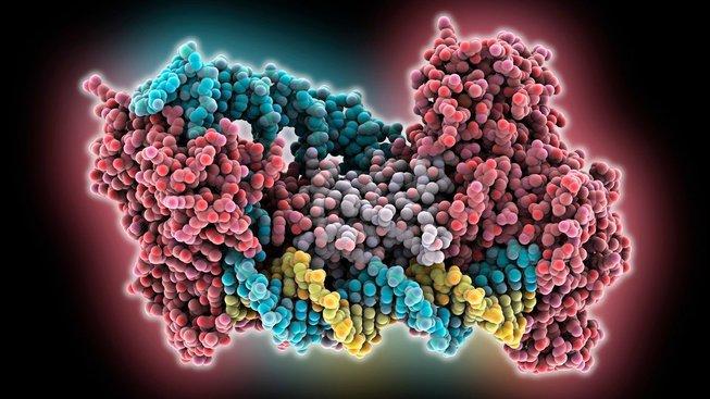 Genový editor CRISPR nechtěné mutace nakonec nezpůsobuje