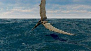 Ilustrace zobrazující pteranodona