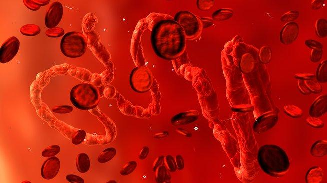 Virus eboly, 3D ilustrace