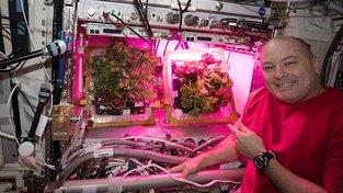 Na Mezinárodní vesmírné stanici už kosmonauti svou miniaturní zahrádku mají, leč příliš neplodí