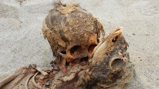 Ostatky obětovaného dítěte a lamy