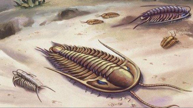 Trilobiti během kabrické exploze