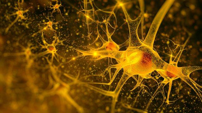 Vědcům se podařilo přeprogramovat krevní buňky, aby se změnily v neurony. Ilustrační snímek