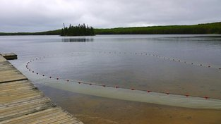Živice v kanadském jezeře