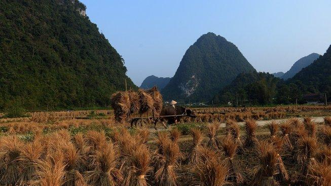 Hoabinhská kultura existovala v době pozdního paleolitu či mezolitu. Ilustrační snímek ze současného života v provincii Hòa Bình
