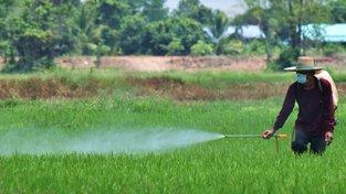 """Myši dostávaly množství pesticidů označené za """"bezpečné"""". Ilustrační snímek"""