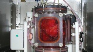 Kultivované plíce