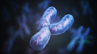 Chromozomy Y jsou už nyní desetkrát menší než X, postupem času zmizí úplně. Ilustrační snímek