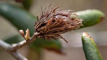 rostliny paraziták