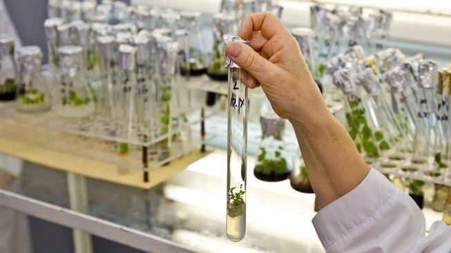 Fotosyntézu snad bude jednou možné spouštět uměle. Ilustrační snímek