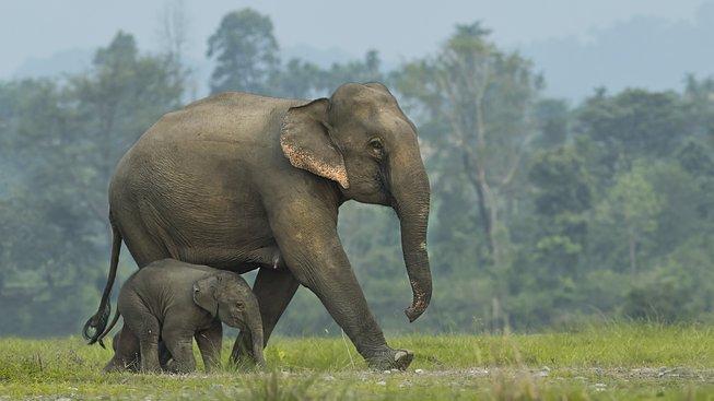 Slon v porovnání s rejskem působí jako tupá hora těžko koordinovatelné hmoty
