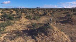 Roy Funch na jednom z obřích termitišť