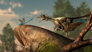 Ostnová pera prehistorických ptáků měla zřejmě podobnou funkci jako pestrý ocas ještěrek. Ilustrační kresba