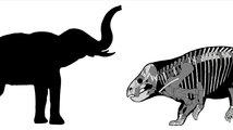 Lisowicia bojani, sloni triasu
