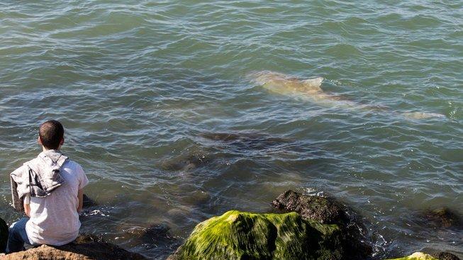 Žraloci u pobřeží Hadery lákají turisty