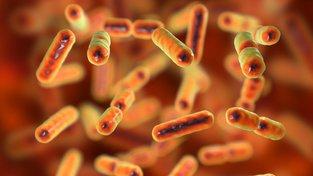 Některé bakterie rodu Bacteroides snižují vnímání kvality života. Ilustrační snímek