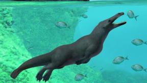 Předchůdci velryb před víc jak 40 miliony lety